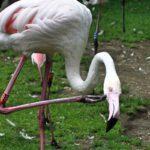 Zoo in der Wingst