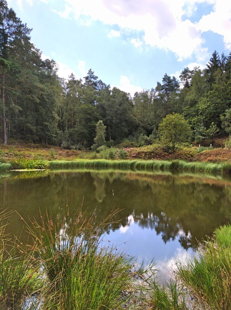 Fischbeker Heide im August