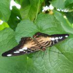 Sachsenwald Garten der Schmetterlinge