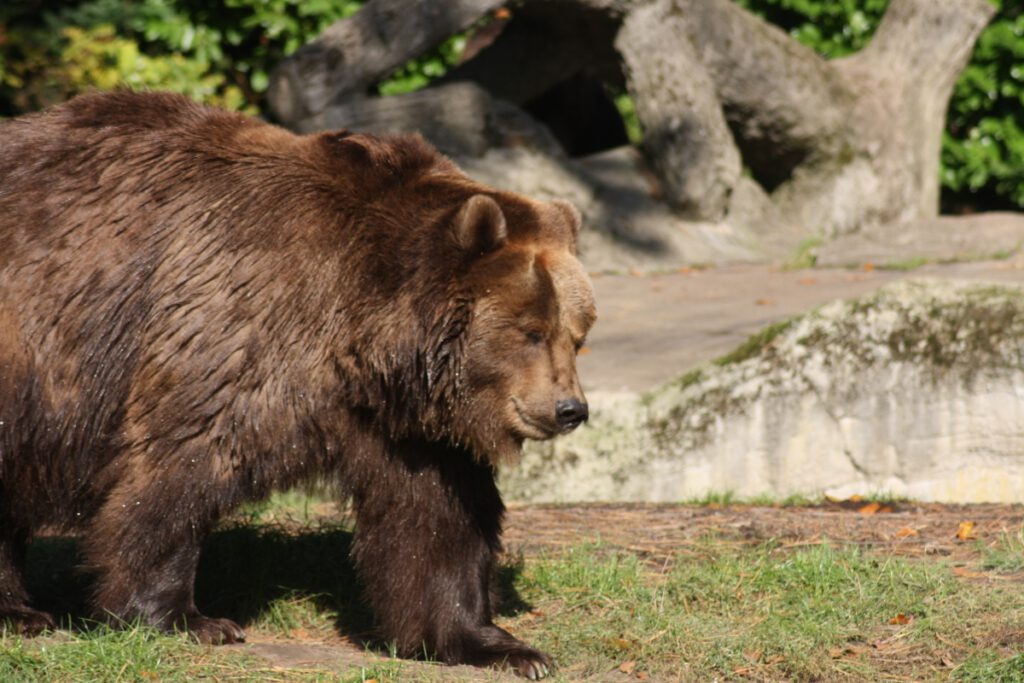 Hagenbecks Tierpark
