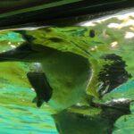 Zoo am Meer Basstölpel