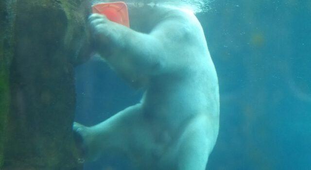 Zoo am Meer Eisbären